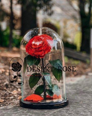 ПОДАРОК/Роза в колбе 32 х 22 Premium/роза/цветы/Европа/собственное про