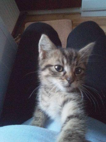 Oddam małego kota
