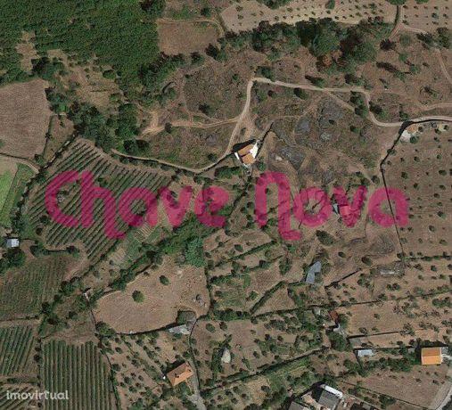 JP - Terreno agrícola com Oliveiras em Vinhó Gouveia