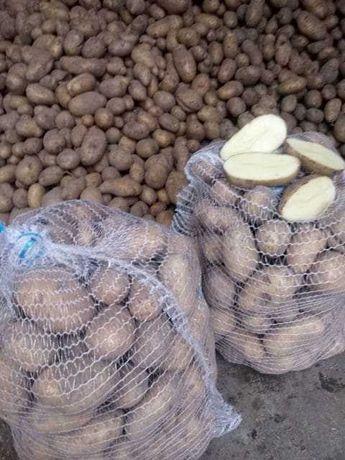 Ziemniaki Katania i Sifra