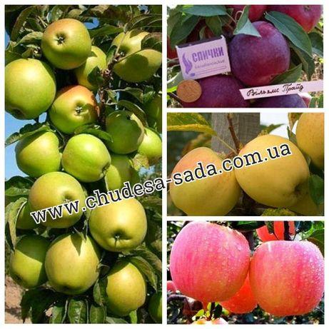 Саженцы яблони, груши от производителя опт и розница 73 сорта.