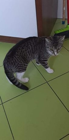 Oddam domową kotke
