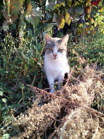 Кошка в добрые руки. Ловит мышей!