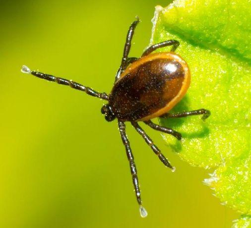 Opryski, zwalczanie kleszczy ,komarów, pasożytów, chorób w ogrodzie