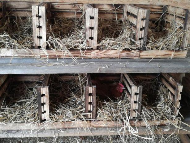 Skrzynka drewniana gniazdo dla kur niosek grzęda kurnik do wylęgu