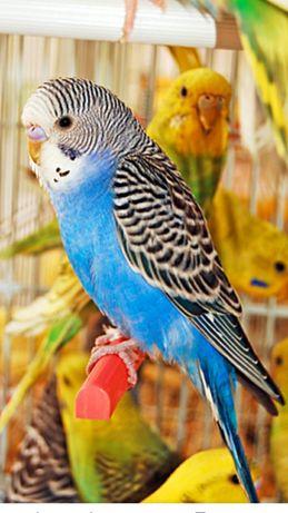 Попугаи молодые и красивые