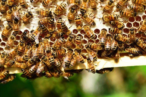 Pszczoły z kompletnym ulem