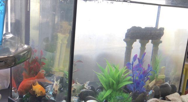 Aquario de vidro 10lt
