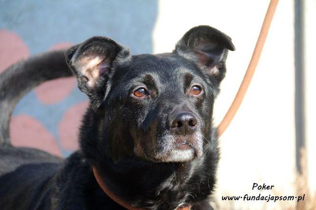 Poker - piękny psiak szuka domu