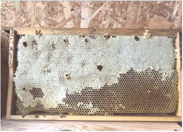 Степная (УС) ПчелопакетЛучшие пакеты!