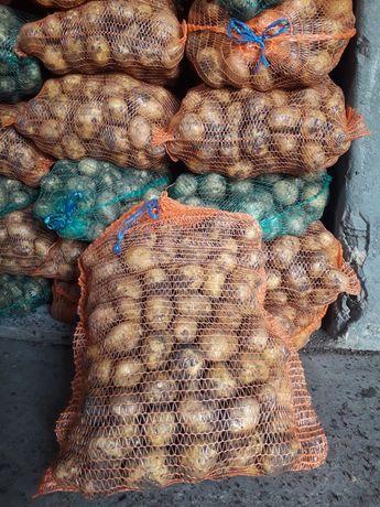 Ziemniaki młode odmiana Denar