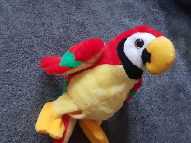 Papuga gadajaca po polsku powtrzara słowa