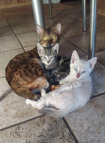 Отдам Красивых кошек