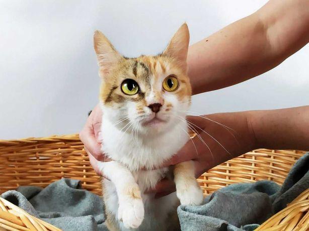 Трьохколірна кішечка Ліза(1рік),стерилізована,кішка,кошка,киця