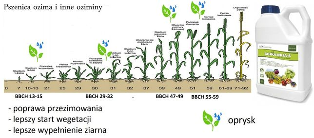 Nawóz Na Zboża Trawy Kukurydzę Ekologiczny Agrolinija 25L na 10ha