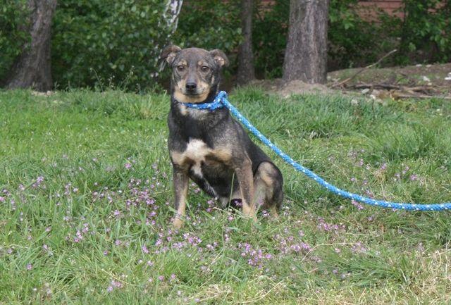 Cudowny psiak czeka w schronisku na dom ocal go i adoptuj