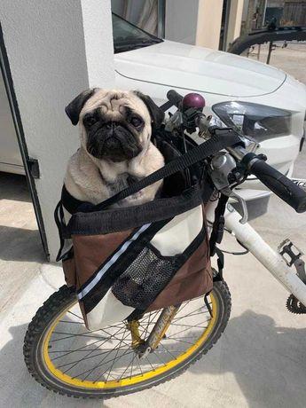 Cesto de transporte de animal de estimação