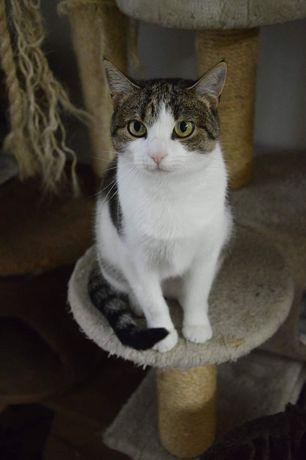 Xara - spokojna, delikatna kotka szuka domu