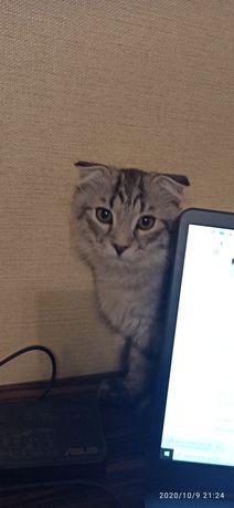 Котенок, мальчик 3 месяца отдам в хорошие руки котеня кот кіт