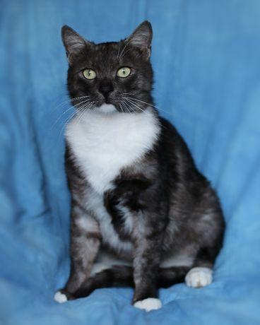 Милейший ласковый кот 1 год кастрирован