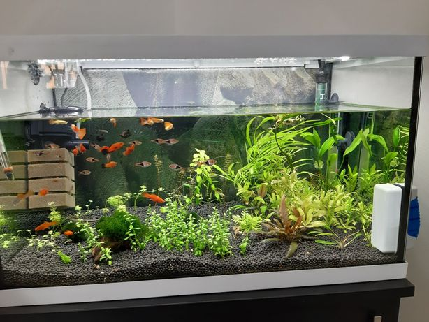 Обслуговування акваріума