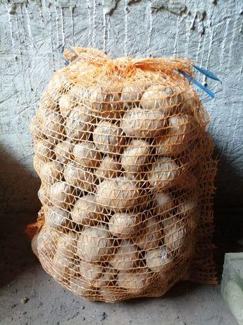 Ziemniaki wielkości sadzeniaka