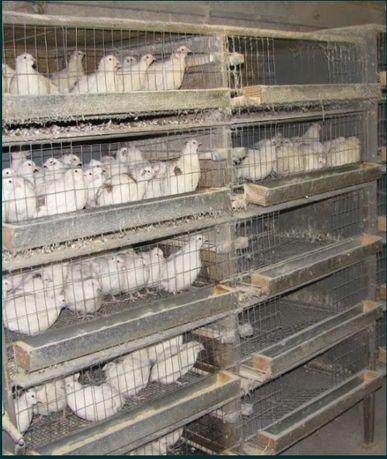 Клітка для вирощування перепелів та курчат