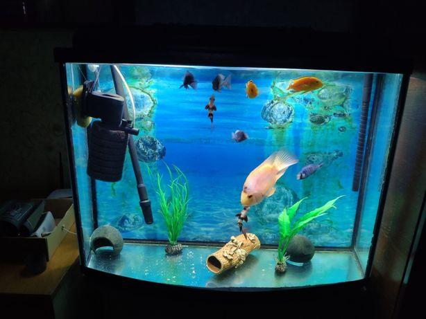 Боция клоун, голубой дельфин, трех гибридный попугай, лабидохромус елл
