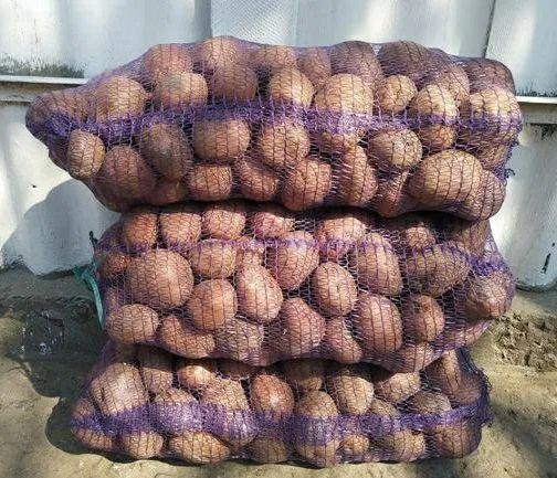 Картопля біла роса Червоноград - изображение 1