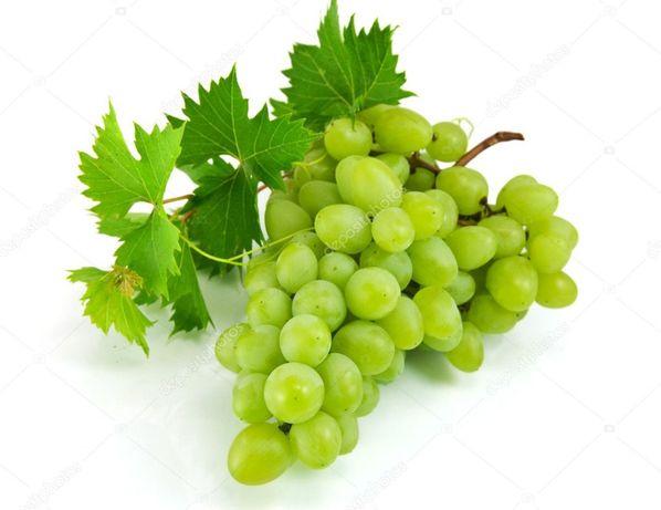 Саджанці/ саженцы, чубуки/ черенки винограда