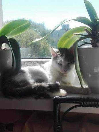 Młody kotek biały szary Pierożek