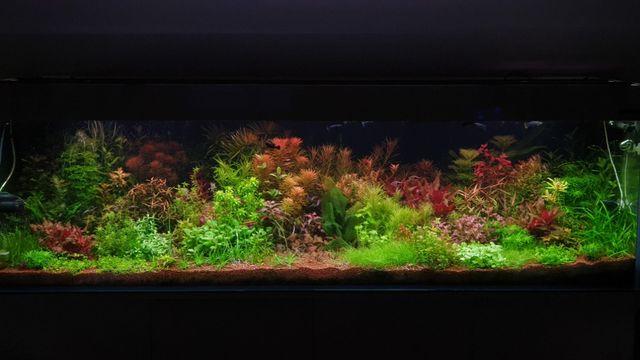 Rośliny akwariowe-zestaw 28 gatunków, ponad 160szt do akwarium 200l