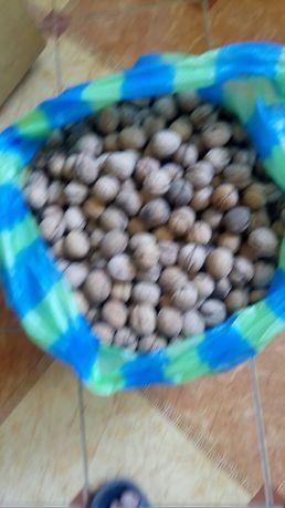 грецкие орехи в скорлупе 25кг по 20 гр.