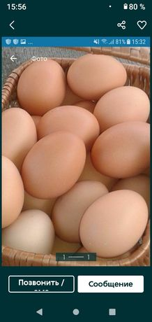 Яйца домашние свежие