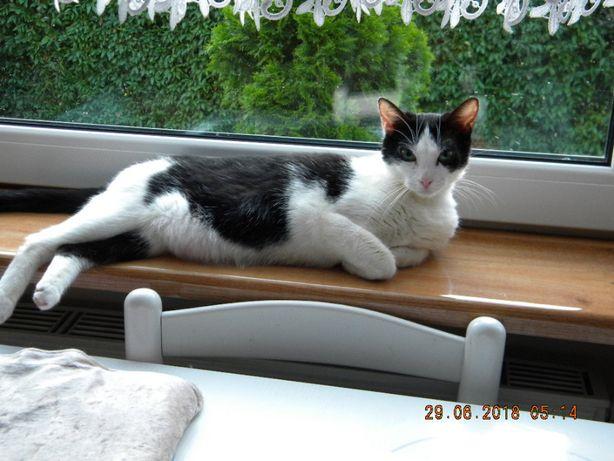 Kicia, około 3 letnia koteczka.