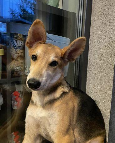 Люк щенок 4 месяца собака собачка щеня