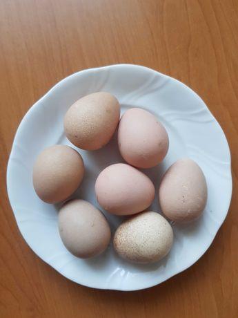 Jajka jaja perlicze ekologiczne