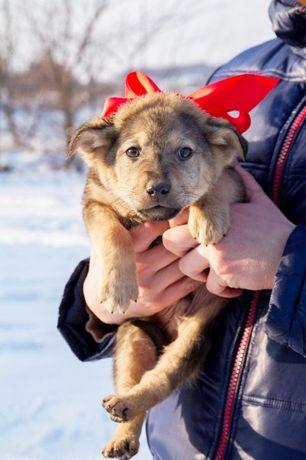 Маленькая непоседа в поиске семьи, щенок щенки