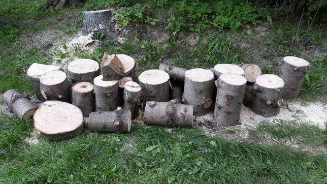 Drzewo kawałki  jodły i sosny, pniaki