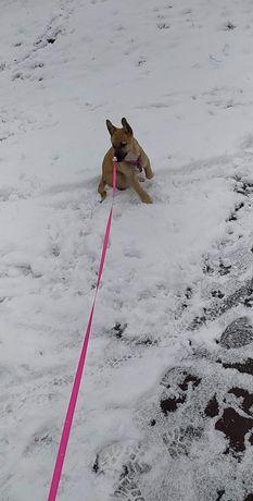 Oddam psa w typie owczarka wabi sie Lili