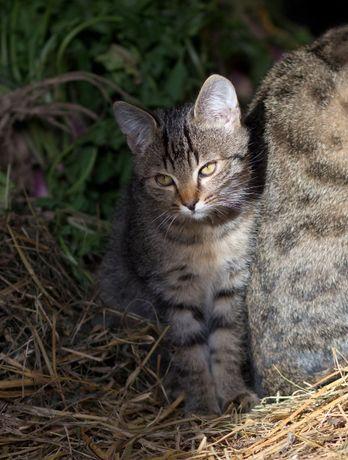 Kotki małe 5 miesięczne - parka - oddam za darmo!