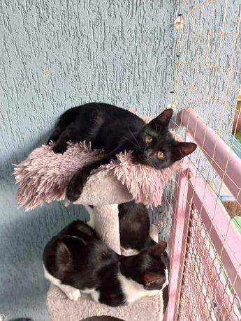 Czarny kociak wcale nie przyniesie Ci pecha! Pokochaj małego Gacusia!