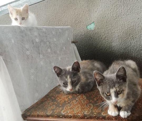 СРОЧНО! Котята. Отдам котят. Сегодня нам подкинули их во двор.