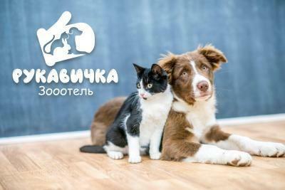 Перетримка котів, передержка котов, передержка кота, готель для котів