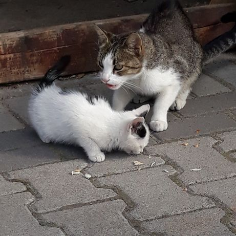 Kotki koty oddam w dobre ręce