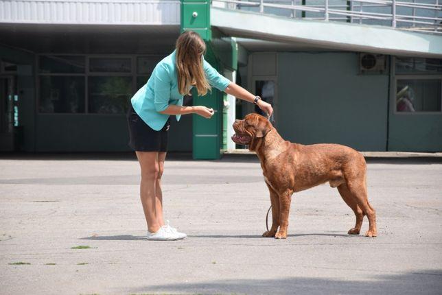 Хендлер. Подготовка собак к выставкам. Показ в ринге.
