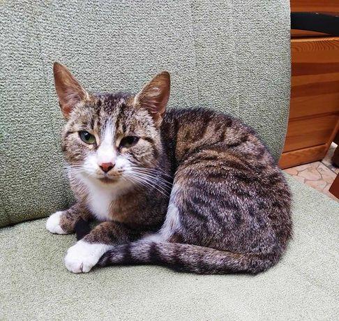 Kochana koteczka do adopcji