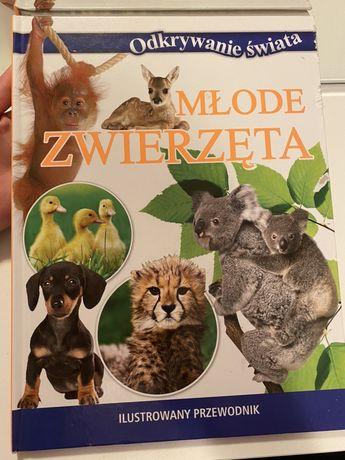 """Książka """"Odkrywanie świata. Młode zwierzęta"""""""
