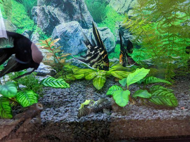 160l akwarium z osprzętem, rybkami i roślinami