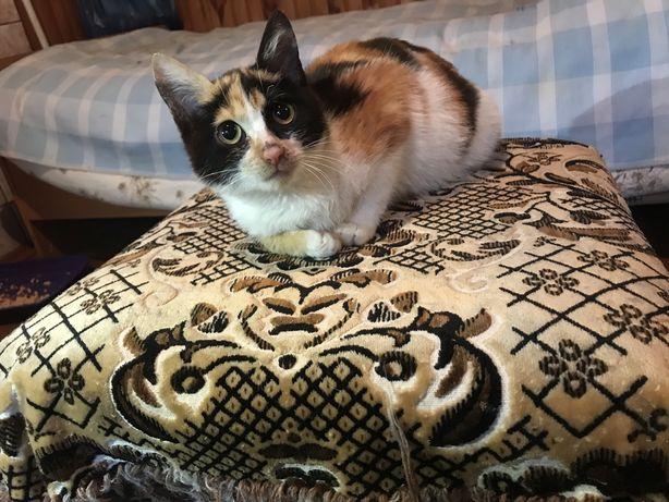 Настоящая кото-леди ищет дом.